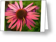 Hotel Garden Greeting Card