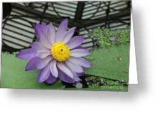 Hothouse Waterlily Greeting Card