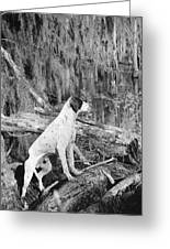 Hound Dog Greeting Card