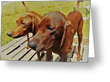 Hounds Greeting Card