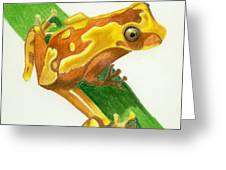 Hourglass Frog Greeting Card