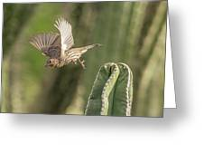 House Finch 0573 Greeting Card