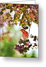 House Finch Hanging Around Greeting Card