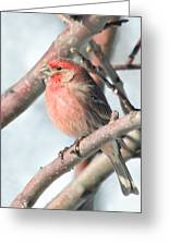 House Finch In An Apple Tree Greeting Card