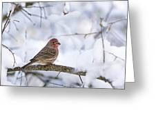 House Finch In Snow Greeting Card