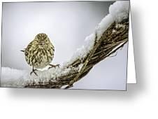 House Finch Snow Is Coming Greeting Card by LeeAnn McLaneGoetz McLaneGoetzStudioLLCcom