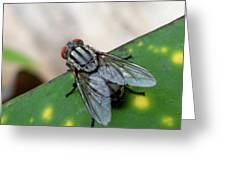 House Fly On Leaf Greeting Card