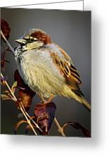 House Sparrow 1 Greeting Card