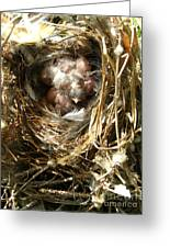 House Wren Family Greeting Card