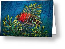 Hovering - Red Banded Wrasse Greeting Card