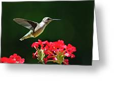Hovering Hummingbird Greeting Card by Christina Rollo