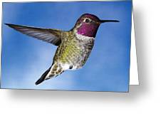 Hovering In Sky Greeting Card