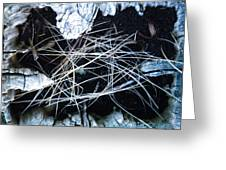 How A Log Builds A Nest Greeting Card