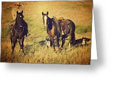 How 'bout Them Cowgirls Greeting Card