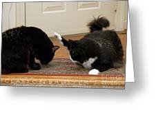How Cat Fights Start Greeting Card