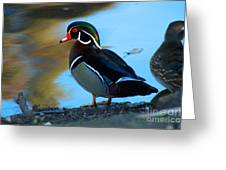 How Much Wood Could A Wood Duck Chuck Greeting Card