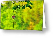 How To Catch A Tree Greeting Card