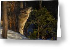 Howl In The Woods Greeting Card