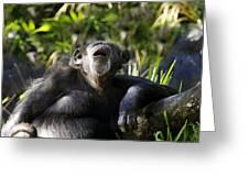 Howling Chimpanzee Greeting Card
