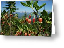 Huckleberry Flowers Atop Huckleberry Mountain In Glacier National Park Montana Greeting Card