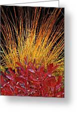 Huckleberry Glow Greeting Card