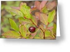 Huckleberry Greeting Card by Idaho Scenic Images Linda Lantzy