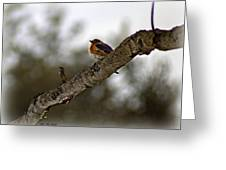 Huddled Bluebird Greeting Card