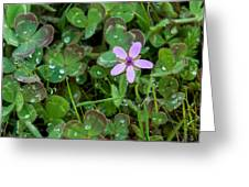 Huge Beauty In A Small Wildflower Greeting Card