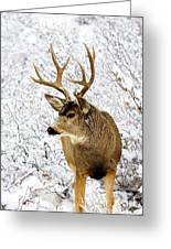 Huge Buck Deer In The Snowy Woods Greeting Card