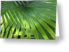 Huge Palm Leaf Greeting Card