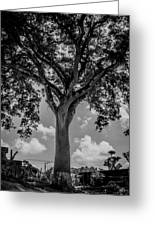 Huge Tree 12 Greeting Card