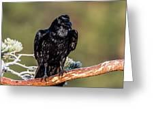 Huginn The Raven Greeting Card