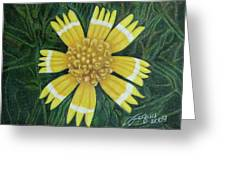 Huisache Daisy Greeting Card