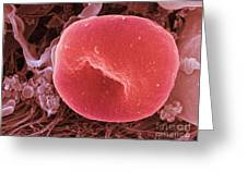 Human Red Blood Cell, Sem Greeting Card