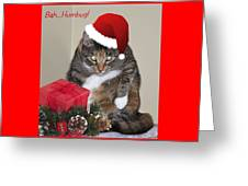 Humbug Greeting Card by Cathy Kovarik