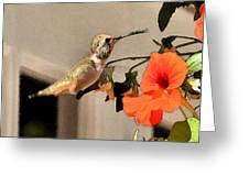 Hummer And  Nastursians Greeting Card
