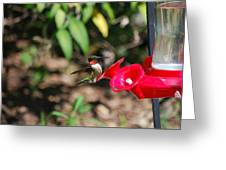Hummer Greeting Card