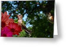 Hummers And Colored Daisies Greeting Card