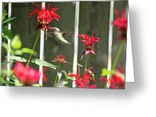 Humming Bird 7 Greeting Card