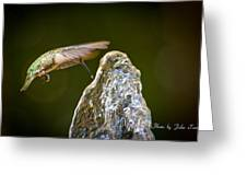 Humming Bird Hovering Over Water Fountain Getting A Drink Greeting Card