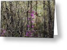 Humming Bird In Nature Greeting Card