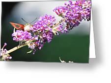 Humming Bird Moth Greeting Card