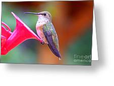 Hummingbird - 18 Greeting Card