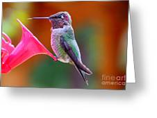 Hummingbird - 28 Greeting Card