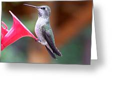 Hummingbird 1 Greeting Card