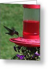 Hummingbird 1 Greeting Card