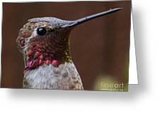 Hummingbird 16 Greeting Card