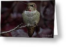 Hummingbird 17 Greeting Card