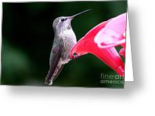 Hummingbird 23 Greeting Card