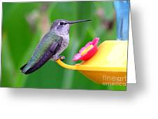 Hummingbird 32 Greeting Card
